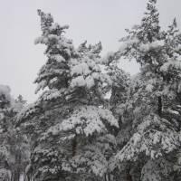 Зимова краса селища