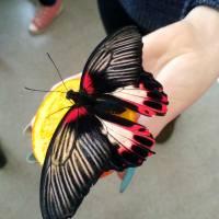 Виставка метеликів - ЗОШ 1 (6)