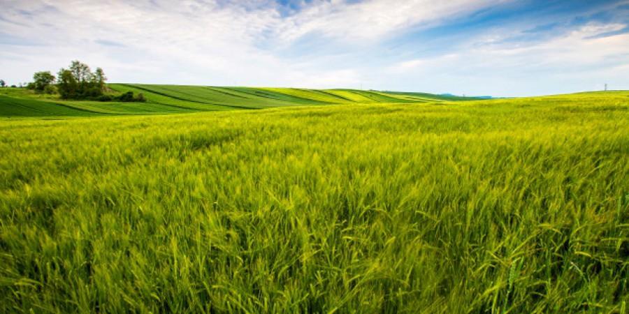 19 червня в Україні відзначають День Фермера