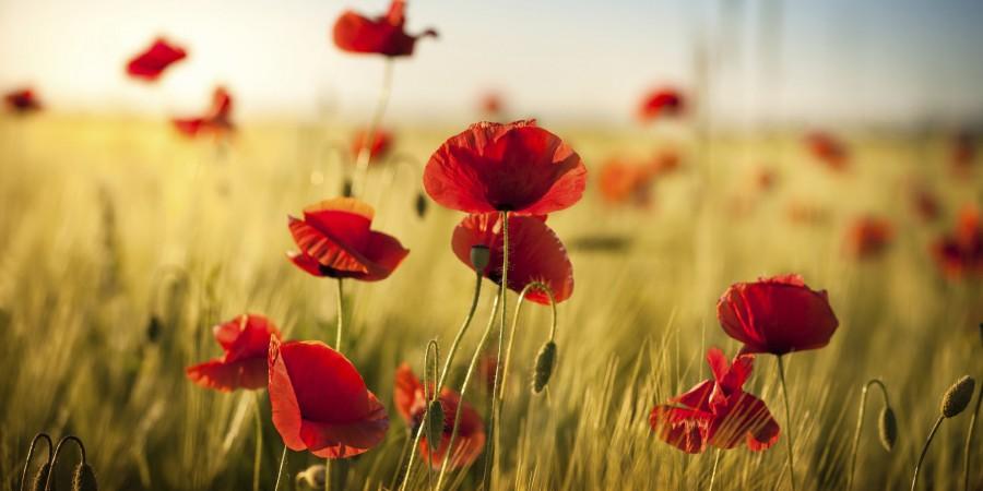 З Днем пам'яті та примирення і 76-ю річницею Перемоги над нацизмом у Другій світовій війні!