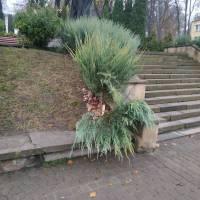 У центрі міста вандали знову понищили зелені насадження