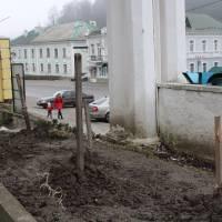 Біля пам'ятника Тарасу Шевченку викрали кущі троянд