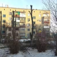 санітартна очистка потенційно-небезпечних та самосівних зелених насаджень
