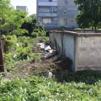 Зелені насадження знищила місцева мешканка