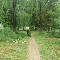 Толока в міському парку