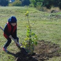 Висадка першої в Україні Алеї дубів