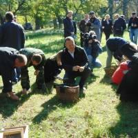 Збір жолудів у Будищах