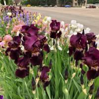 Квіти та рослини Бобровиччини