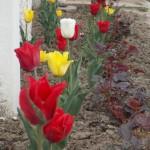 Квітучий Томашпіль