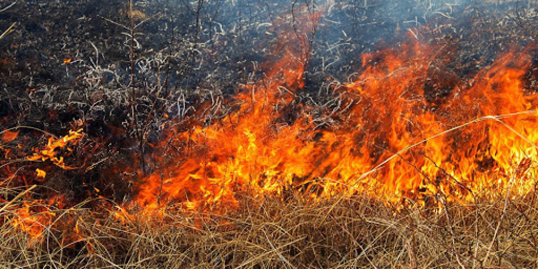 Спалювання сухої рослинності – небезпека для людини та довкілля