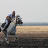 коні3