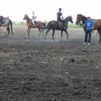 коні7n