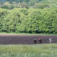 коні 6