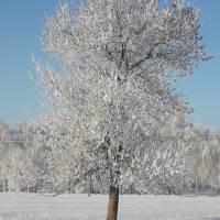 зима 006