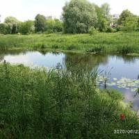 Річка Луга