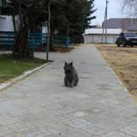 вул. Українська,15