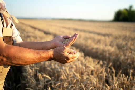 підтримка малих фермерських господарств 2021