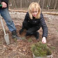 Гришковецька громада долучилась до лісокультурної кампанії