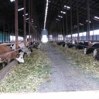 Тваринницька ферма