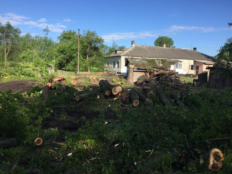 Аварійні дерева у Троковичах ліквідовують