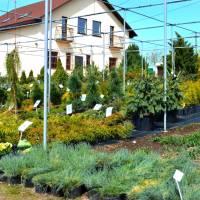 Садовий центр