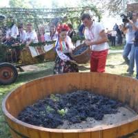 Фестиваль вина_2016
