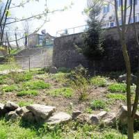 Толока з озеленення селища 8