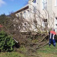 Видалення аварійних дерев 1