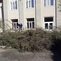 Видалення аварійних дерев 2