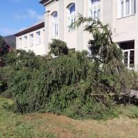 Видалення аварійних дерев 3