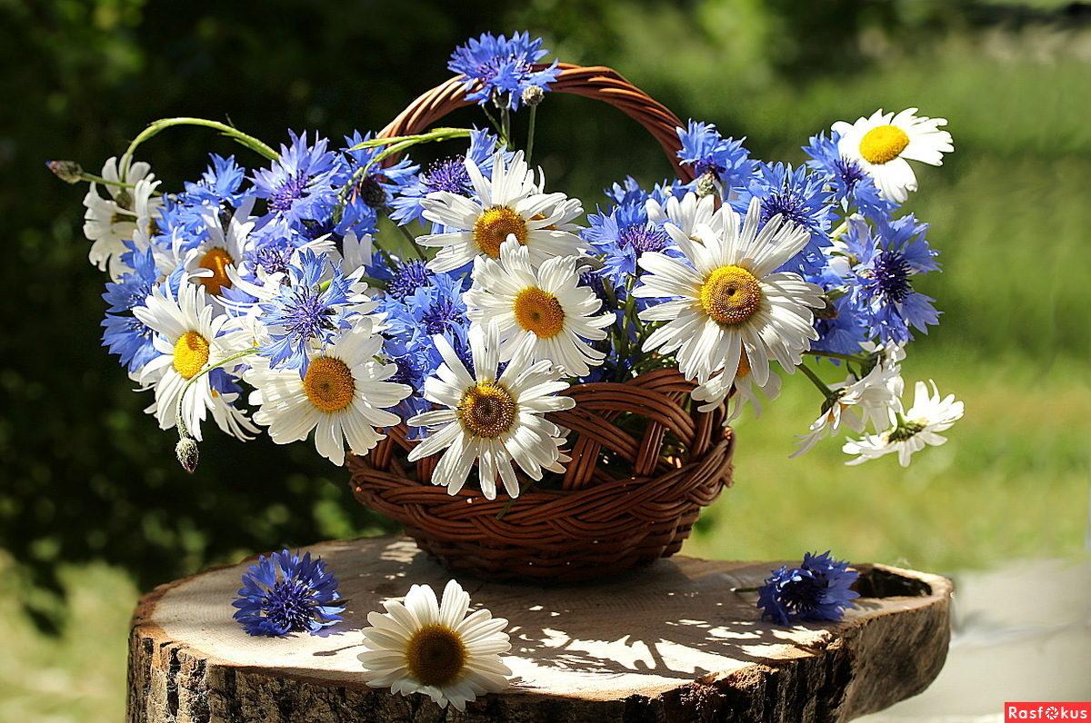 разделе гостиницы открытки полевы цветов с днем рождения сумма выплаты
