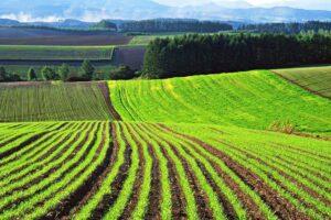 В Україні з'явився ринок земель: що нас чекає