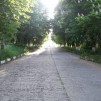 Каштанова алея