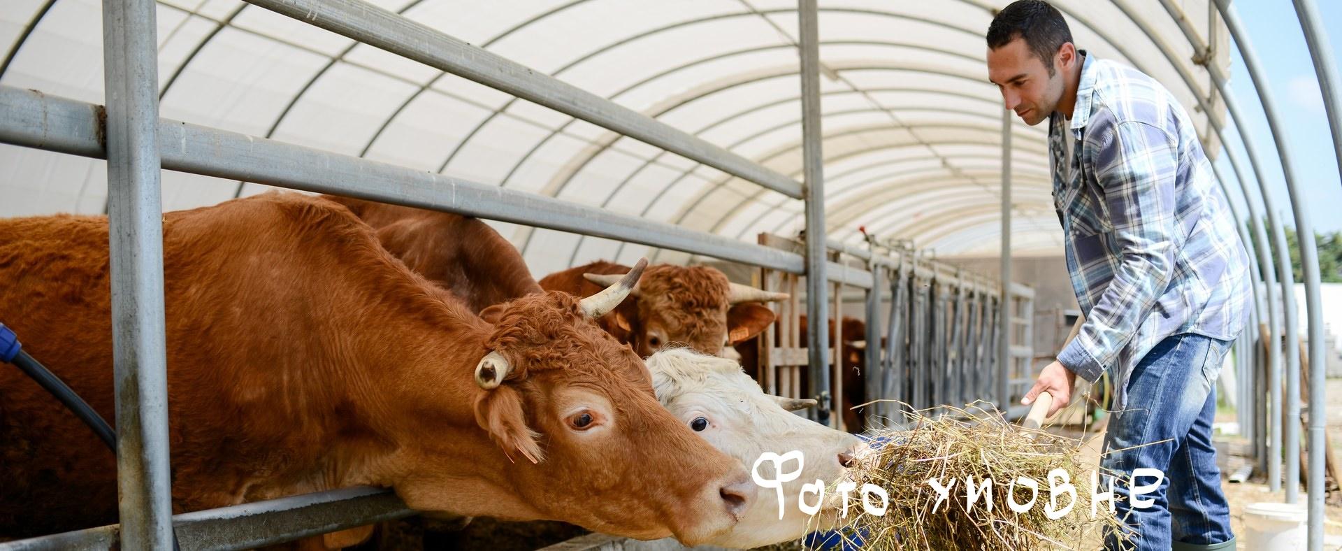 Про державну підтримку тваринництва у 2021 році
