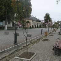 У центрі Нижанкович