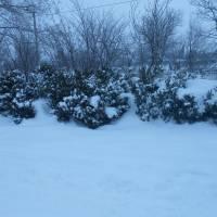 Сніжна зима 2016