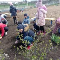 Насаджування квітів на дитячому майданчику