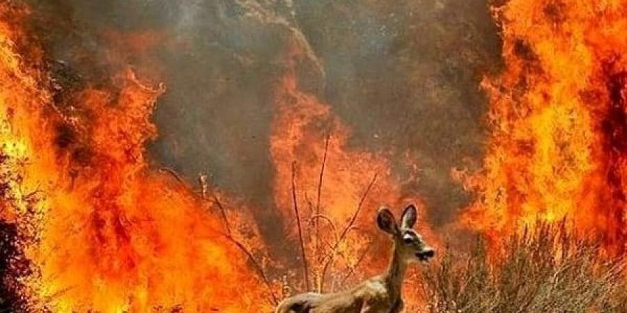 Бережіть ліс і землю від пожеж!
