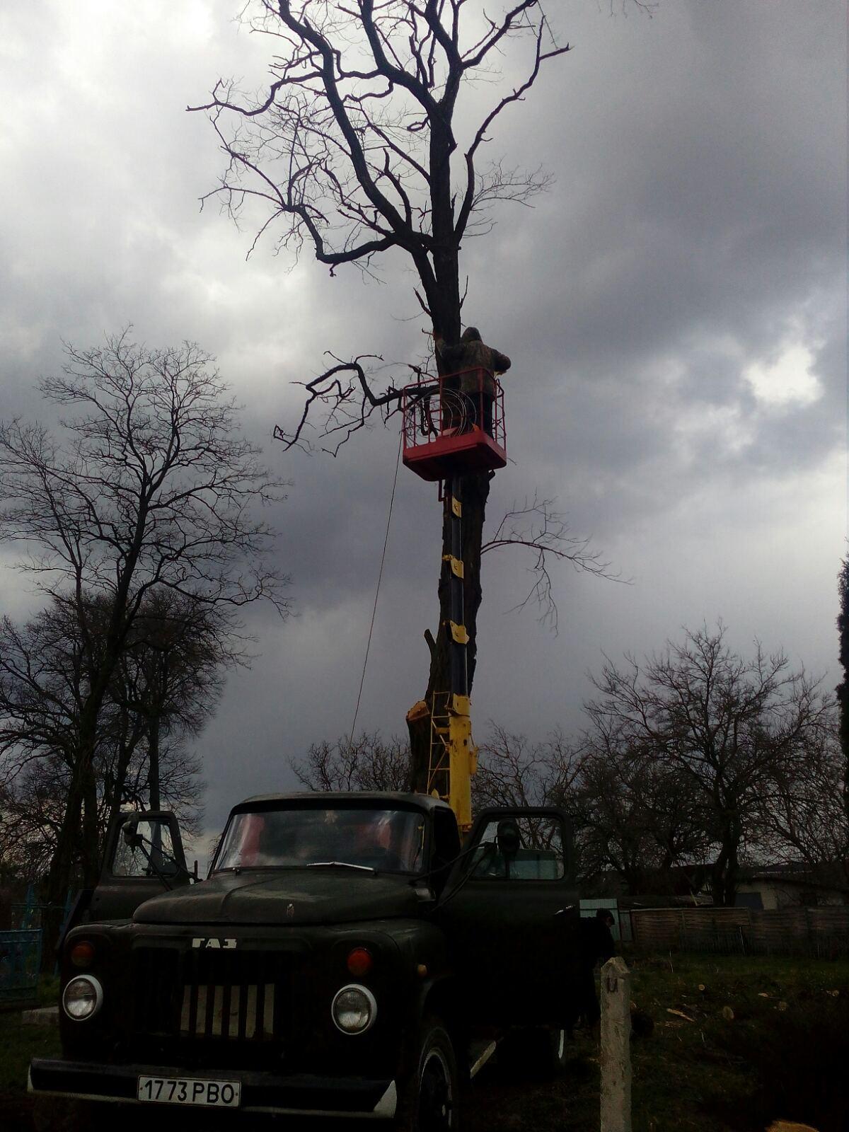 Зрізані аварійні дерева