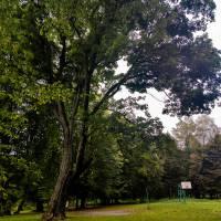 Фото парку - пам'ятки садового-мистецтва в с. Олександрія