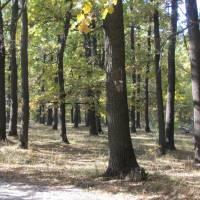 Гетьманський національний парк