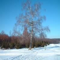 Зимові пейзажі.По дорозі до села...