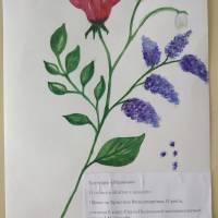 Скала - Подільська ЗОШ І - ІІ ст. (4)