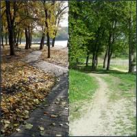 До і після. Алея у парку.