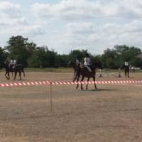 ЧСП Новогригорівка виступ конно-спортивної школи на День Державного прапора