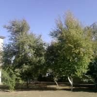 Шкільне подвір'я