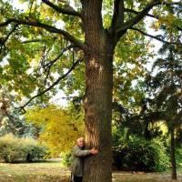 Озеленювач біля  дерева