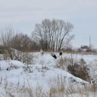 Колибаївська громада рятує лелек, які потерпають від морозів і снігопаду.