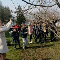 У березні цього року Україна приєдналася до міжнародного культурного проекту «Українське писанкове дерево», у якому беруть участь українські діаспори