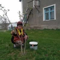посади калину